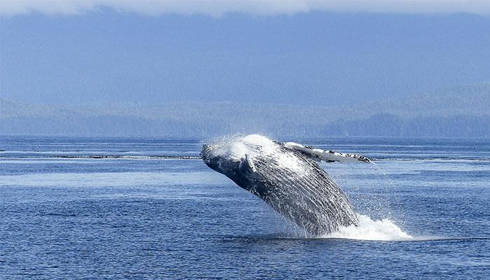 baleines colombie