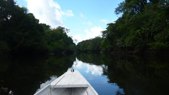 amazonas colombie
